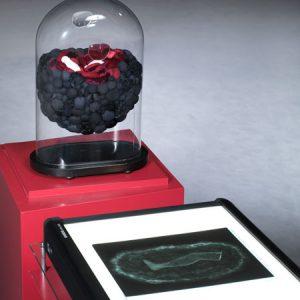 precipitazione, 2-teilig, Stoffe, Fell, Brillengläser, Sturzglas auf Sockel mit Radiographie, Höhe 44 cm x 18,5 cm x Breite 30 cm, 2013